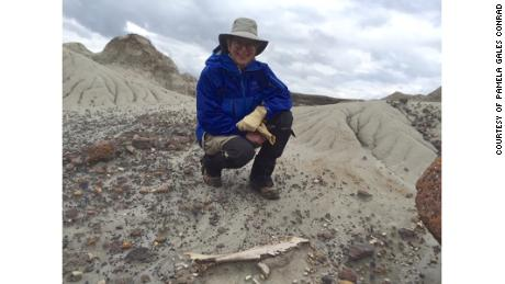 Przeglądaj Prowincjonalny Park Dinozaurów Conrada w Albercie w Kanadzie.