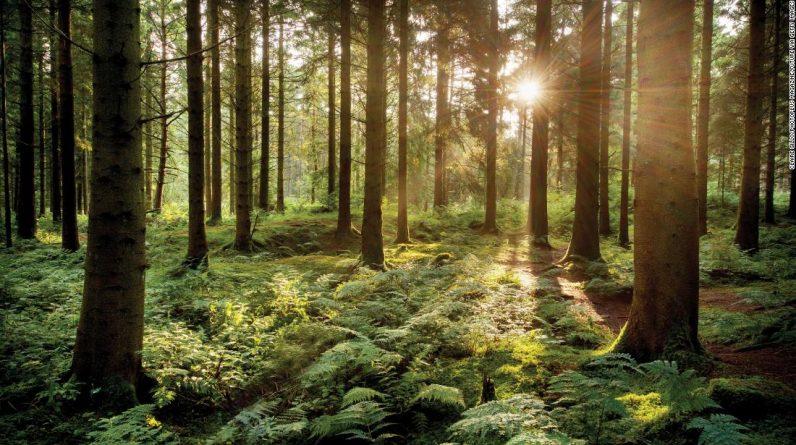 Miejskie dzieci mają lepsze zdrowie psychiczne i świadomość, jeśli mieszkają w pobliżu lasów