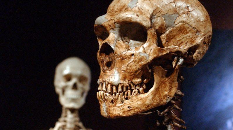 Badanie wykazało, że tylko 7% naszego DNA jest unikalne dla współczesnych ludzi