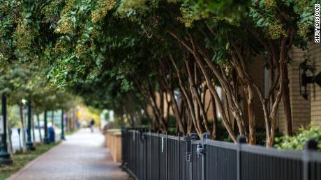 Sadzenie drzew może pomóc temu miastu zapobiec 400 przedwczesnym zgonom