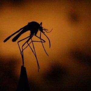 Pierwszy przypadek wirusa Zachodniego Nilu zgłoszono w 2021 r. w hrabstwie Los Angeles