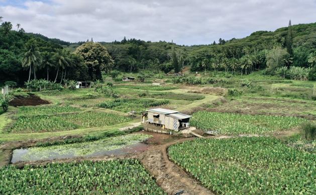 Szklarnia wodna wprowadza innowacje w produkcji żywności na Wyspach Cooka