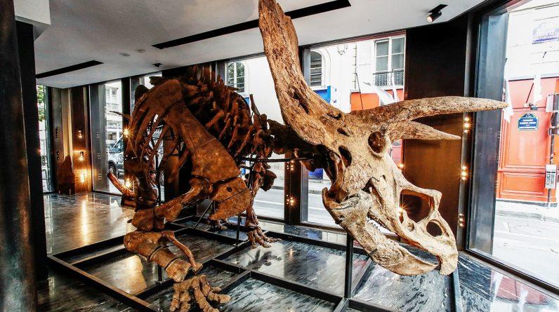 Największy na świecie szkielet triceratopsa może kosztować na aukcji ponad 1,4 miliona dolarów