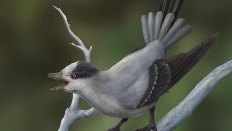To jest ilustracja tego, jak starożytny ptak ożył.
