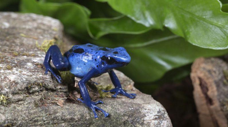 Dlaczego niebieski kolor jest tak rzadki w naturze?