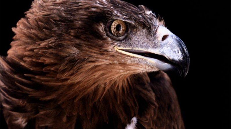 Naukowcy znajdują niesamowitego orła liczącego 25 milionów lat