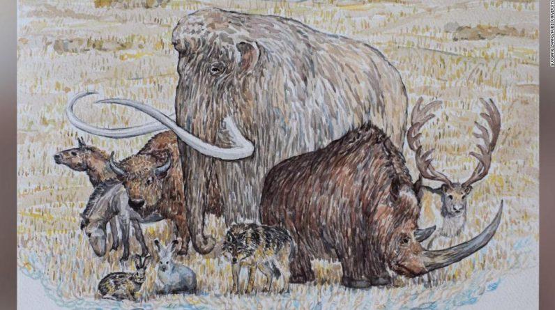 Mamuty i inne olbrzymy epoki lodowcowej przetrwały dłużej, niż sądzili naukowcy