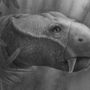 Dlaczego tylko ssaki mają kły?  Badanie rzuca nieco światła na jego zaskakujące pochodzenie