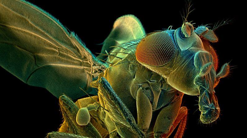 Dlaczego naukowcy spędzili lata na mapowaniu mózgu tego stworzenia?